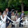 Tauben an Hochzeit